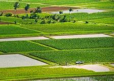 考艾岛Hanalei谷芋头调遣风景俯视 图库摄影