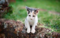 考虑某事的猫 免版税图库摄影