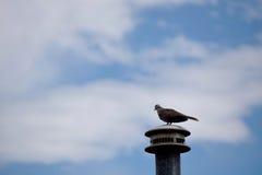 考虑的鸟 免版税库存图片