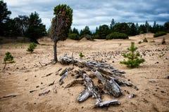 死者和活自然在Kuzomen附近 免版税库存照片