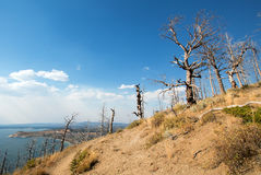 死者烧了树在湖在Yellowstone湖上的小山视图在黄石国家公园在怀俄明 免版税图库摄影