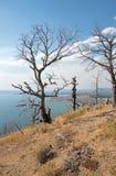 死者烧了树在湖在Yellowstone湖上的小山视图在黄石国家公园在怀俄明 库存图片