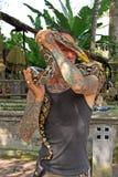 耍蛇者在巴厘岛01 免版税库存图片