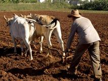 耕与两oxes的农民 库存图片