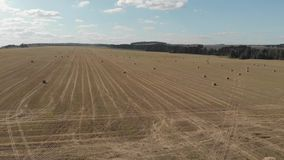 耕地观 小麦田四轴飞行器航拍 影视素材