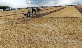 耕大秸杆领域的马在土豆或玉米的爱尔兰与编辑的前景发短信给拷贝 图库摄影