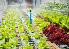 水耕的植物 免版税图库摄影