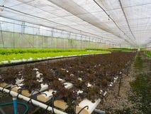 水耕的菜农场 免版税库存图片