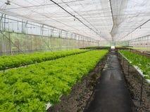 水耕的菜农场 库存图片