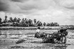 耕的padi领域 免版税图库摄影