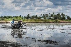 耕的padi领域 库存图片