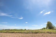 耕种与美丽的蓝色清楚的天空的米领域在讽刺文泰国的下午 库存照片