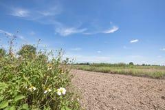 耕种与迷离前面草和花的米领域在讽刺文泰国在下午阳光下 库存图片