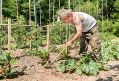 耕种土壤的资深花匠在庭院里 图库摄影