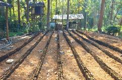 耕种幼木 库存图片