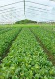 耕种温室 图库摄影
