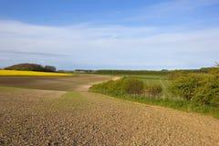 耕种的土壤春天 库存图片