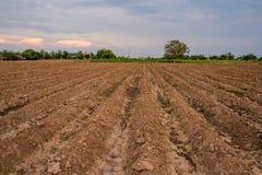耕种的田地庄稼 免版税库存图片