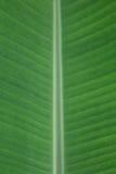 耕种的香蕉叶子纹理  免版税库存图片