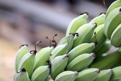 耕种的香蕉比食物是更多 免版税图库摄影