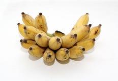 耕种的香蕉 库存图片