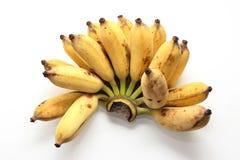 耕种的香蕉 库存照片