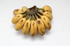 耕种的香蕉 免版税库存图片