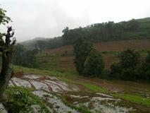 稻耕种背景自然 免版税库存照片