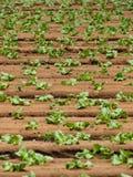 耕种 免版税库存图片