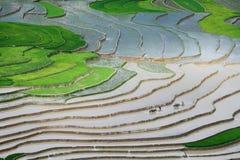 耙松领域在种植米前。 库存照片