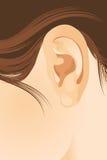 耳朵人 库存图片