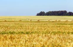 耳朵例证向量麦子 免版税库存照片