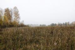 耳朵和gress的领域在一多云秋天天 库存图片