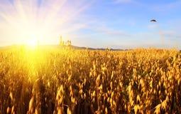 耳朵日出麦子 免版税库存图片