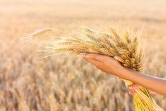 耳朵现有量成熟麦子妇女 免版税图库摄影