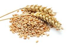 耳朵谷物麦子 免版税图库摄影