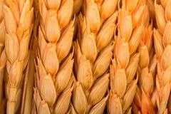耳朵金黄麦子 库存照片