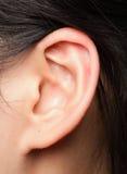 耳朵 免版税库存照片
