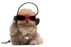 耳机pomeranian红色波美丝毛狗太阳镜 库存照片