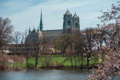 耶稣圣心`的`大教堂与樱花的 图库摄影
