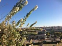 耶路撒冷旧城POANORAMIC视图在摩洛哥 图库摄影