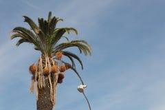 耸立在与照相机,反对蓝天的集合,拷贝空间的街灯的高棕榈树 库存照片