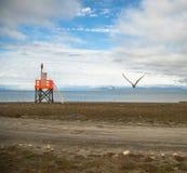 耸立在海滩在Adventfjorden和两只北极燕鸥,胸骨Paradisaea,飞行在斯瓦尔巴特群岛的天空中 图库摄影