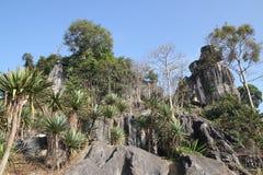 耸立在lushan的峭壁的杉树立场 图库摄影