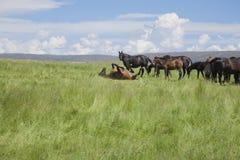耽溺于在绿色大草原的马 免版税库存照片