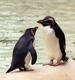 聊天的企鹅 库存图片