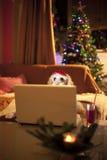 聊天的逗人喜爱的狗 免版税图库摄影