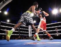 职业拳击在菲尼斯,亚利桑那 免版税库存照片