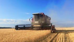 联合收割机会集麦子庄稼 收获剪的麦子 在领域的组合 steadicam射击 食品工业 股票视频