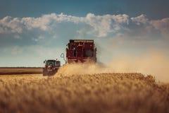 联合收割机农业机器收割金黄成熟whe 库存照片
